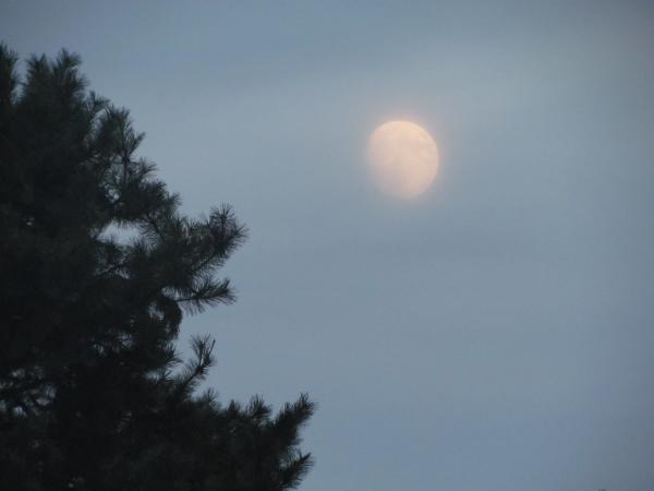 月見/Tsuki-mi, la contemplation du clair de lune