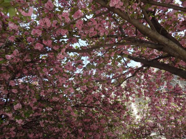 En souvenir du printemps...