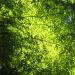 緑/vert